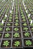 Plantas dentro del cuarto de niños del invernadero Imagen de archivo