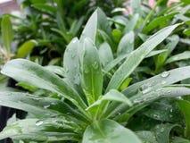 Plantas después de la lluvia Imagenes de archivo