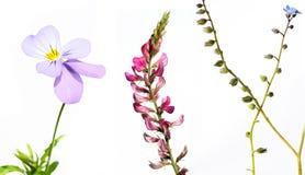 Plantas diferentes de encontro ao fundo branco Imagens de Stock