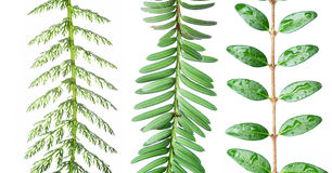 Plantas diferentes de encontro ao fundo branco Imagens de Stock Royalty Free
