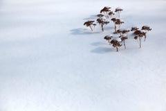 Plantas diminutas na neve imagens de stock