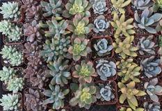 Plantas do à prova de água Fotos de Stock Royalty Free