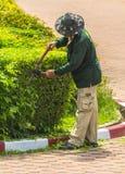 Plantas do aparamento do jardineiro Fotografia de Stock Royalty Free