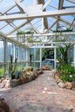 Plantas do cacto Fotos de Stock Royalty Free