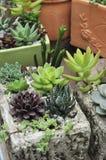 Plantas do cacto Imagem de Stock Royalty Free