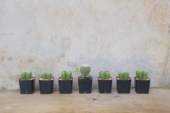 Plantas do cacto e espaço da cópia Foto de Stock Royalty Free