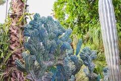 Plantas do cacto fora em um dia de verão imagens de stock royalty free
