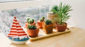 Plantas do cacto na mesa fotos de stock royalty free