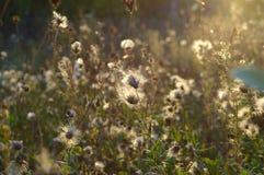 Plantas do campo no outono Imagens de Stock
