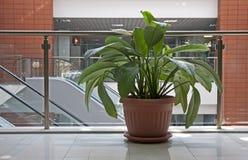 Plantas do escritório Imagem de Stock Royalty Free