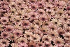 Plantas do fundo Fotografia de Stock