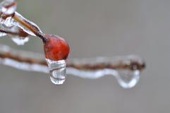 Plantas do inverno Imagem de Stock