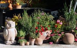 Plantas do Ornamental e das ervas no terraço fotografia de stock royalty free