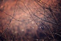 Plantas do outono com gotas da água após o novembro que congela r Imagem de Stock