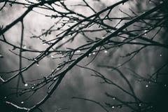 Plantas do outono com gotas da água após o novembro que congela r Foto de Stock