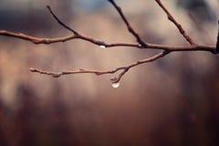Plantas do outono com gotas da água após o novembro que congela r Fotos de Stock Royalty Free