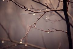 Plantas do outono com gotas da água após o novembro que congela r Imagens de Stock Royalty Free
