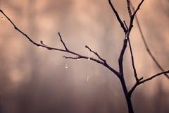 Plantas do outono com gotas da água após o novembro que congela r Imagens de Stock