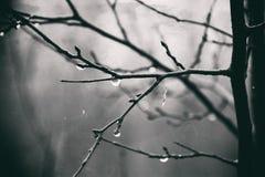 Plantas do outono com gotas da água após o novembro que congela r Fotos de Stock