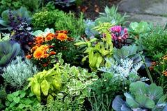 Plantas do outono na cama fresca imagens de stock royalty free