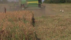 Plantas do pease do lixo da máquina da ceifeira no campo agrícola no verão Foto de Stock