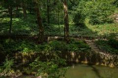 Plantas do pena da Dinamarca do parque nacional de Sintra fotografia de stock royalty free