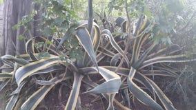 Plantas do ` s do parque Fotografia de Stock Royalty Free