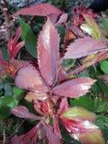 Plantas do verão imagem de stock royalty free