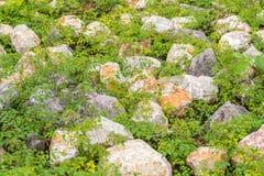 Plantas do whit da cremalheira Foto de Stock