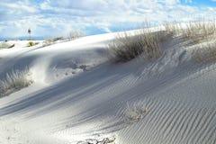 Plantas do Yucca e dunas de areia Imagem de Stock Royalty Free