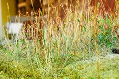 Plantas domésticas em Front Of um degradado Imagem de Stock