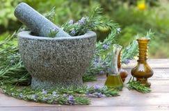 Plantas dos alecrins e óleo de alecrins Fotografia de Stock
