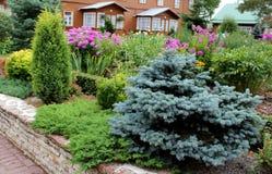Plantas dos ciprestes Fotos de Stock Royalty Free