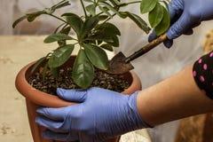 Plantas dos cuidados dos animais de estimação Fotografia de Stock Royalty Free