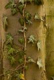 Plantas e árvores foto de stock