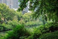Plantas e árvores ao longo dos beira-rio na cidade no meio-dia ensolarado do verão Fotos de Stock