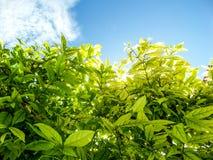 Plantas e árvores ao redor no jardim em casa Imagens de Stock