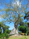 Plantas e árvores em jardins botânicos de Guadalupe imagem de stock royalty free