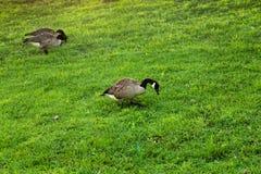 Plantas e animais selvagens no parque em Roosevelt Island em New York City Fotografia de Stock Royalty Free