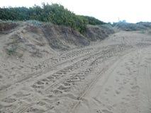 Plantas e arbustos nas dunas Imagem de Stock