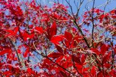 plantas e bagas das folhas de outono em cores da queda Imagem de Stock Royalty Free