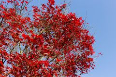 plantas e bagas das folhas de outono em cores da queda Fotos de Stock Royalty Free