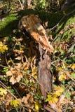 plantas e bagas das folhas de outono em cores da queda Foto de Stock Royalty Free