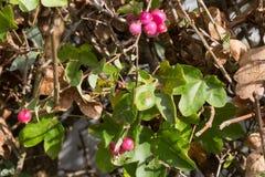 plantas e bagas das folhas de outono em cores da queda Fotografia de Stock