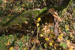 plantas e bagas das folhas de outono em cores da queda Imagem de Stock