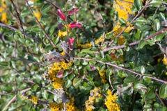 plantas e bagas das folhas de outono em cores da queda Foto de Stock