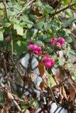 plantas e bagas das folhas de outono em cores da queda Imagens de Stock Royalty Free