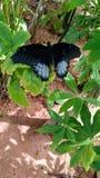 Plantas e borboletas fotografia de stock royalty free