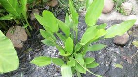 Plantas e córrego no jardim tropical vídeos de arquivo