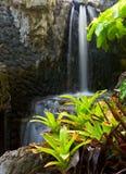 Plantas e cachoeira Imagens de Stock